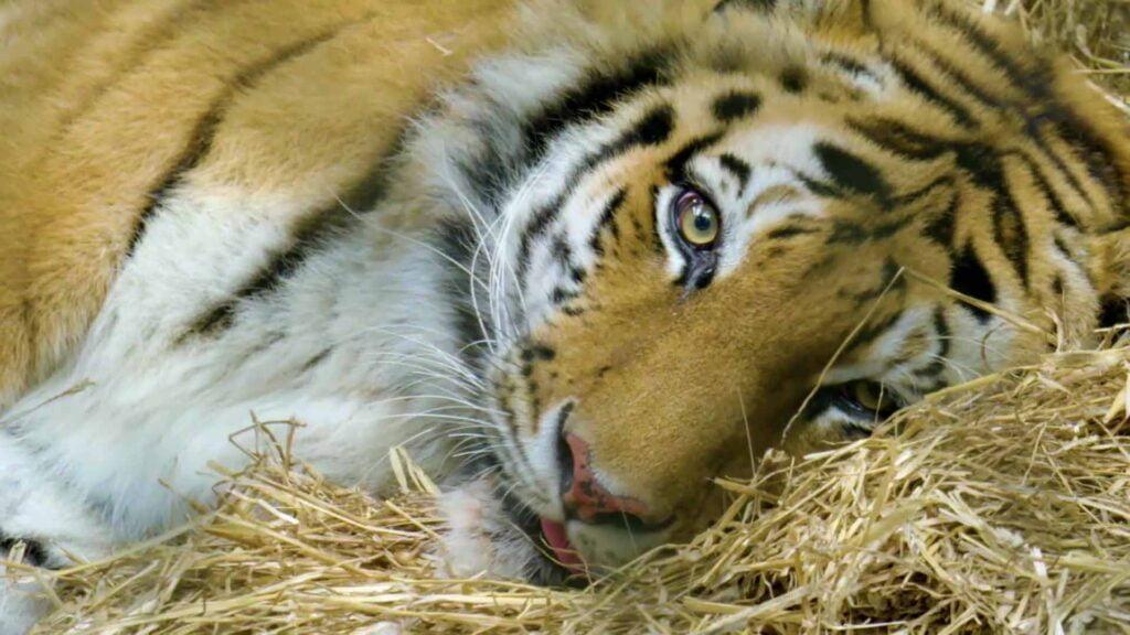 Animal Planet's 'The Zoo: COVID-19 and Animals' uncovers coronavirus impact on animals